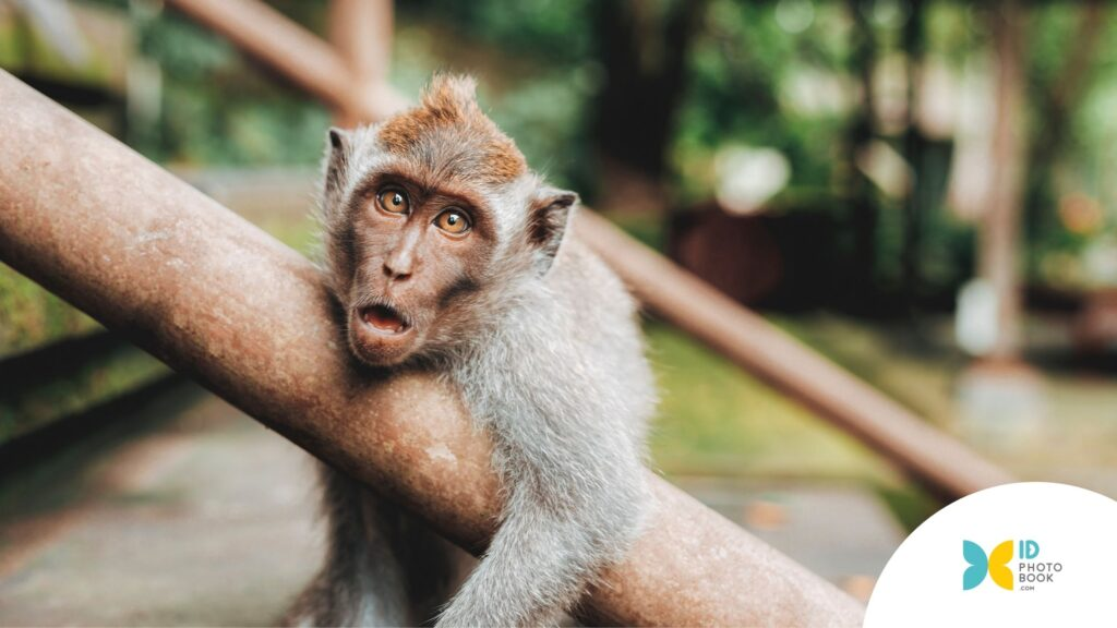 Ubud Monkey Forest - Photobook Anti Mainstream